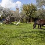 caballo jardín malpartida de plasencia