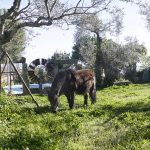 caballo casa rural monfrague