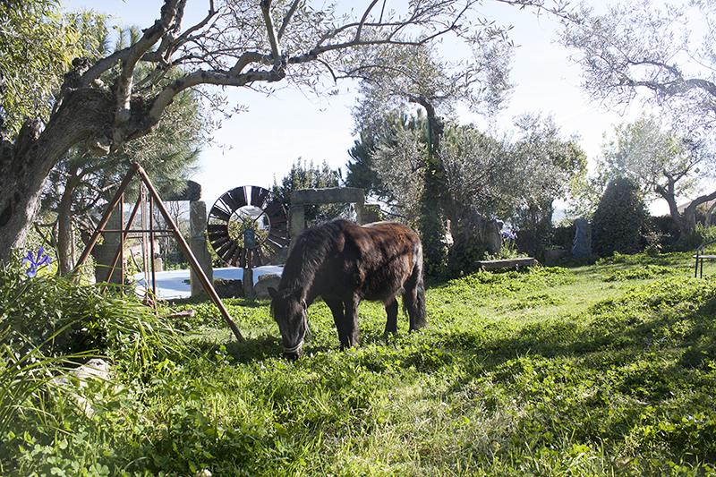 Zonas comunes apartamentos rurales la solana - Casa rural monfrague ...