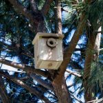 casa rural monfragüe caja nido