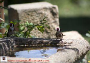 pájaros en casa rural monfragüe