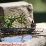birding monfragüe