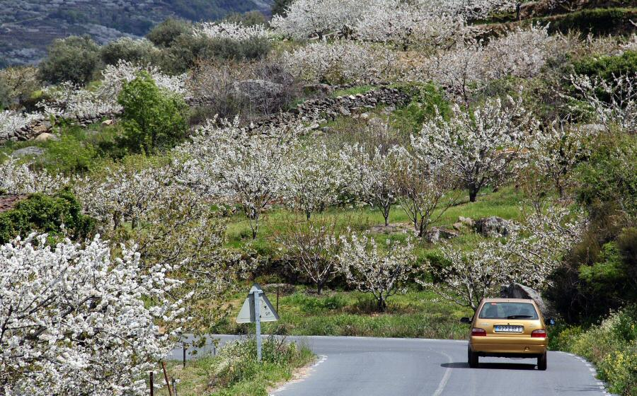 Valle Jerte cerezo en flor