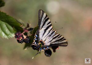 mariposa jardín  casa rural monfragüe