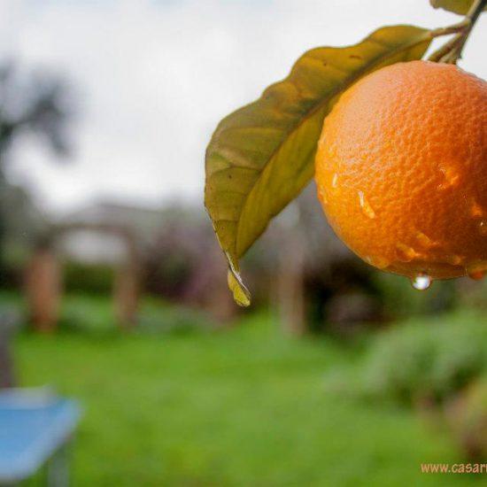 naranja casa rural
